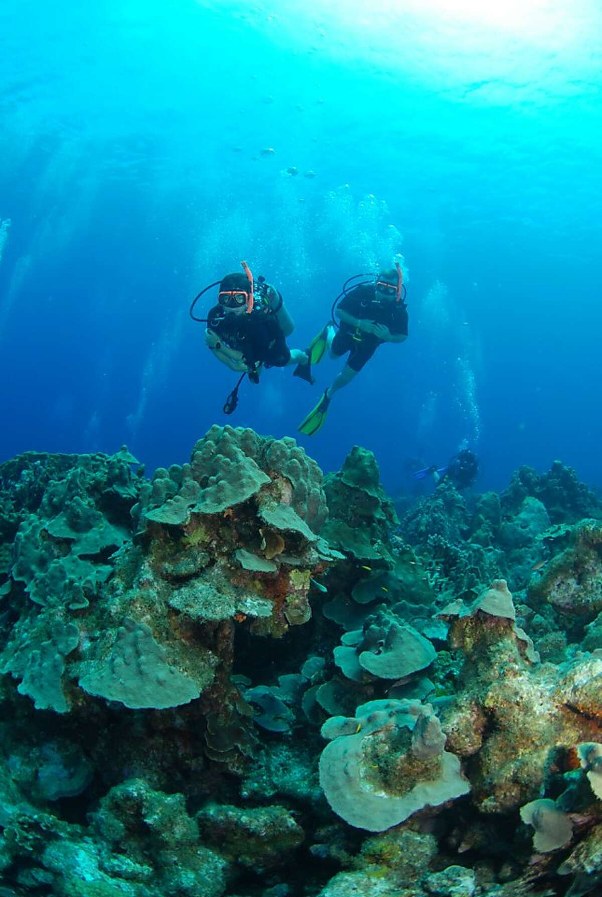 Divers above Mushroom Forest coral reef, Curacao.