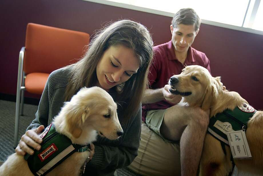 In this May 2, 2012 photo, law students Josh Richey, 22, right, and Lindsay Stewart, 26, play with Hooch, a 19-month-old golden retriever, right, and Stanley, a 4-month-old golden retriever, in between final exams at Emory University in Atlanta. Emory University is part of a small but growing number of schools that are going to the dogs, literally, to help stressed out students relax. From Kent State University in Ohio to Macalester College in Minnesota, colleges are bringing dogs on campus during exams, placing pups in counseling centers for students to visit regularly or allowing faculty and staff to bring their pets to campus to play with students. (AP Photo/David Goldman) Photo: David Goldman, Associated Press