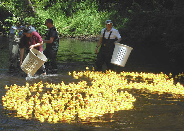 Hundreds of little yellow rubber ducks start their journey down Mill River at the Duckie Derby benefiting St. Catherine's Academy on Saturday. Photo: Mike Lauterborn / Fairfield Citizen contributed