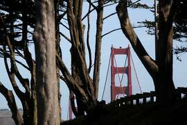 The south tower of the Golden Gate Bridge rises through a grove of trees on the Presidio on May 1, 2012 in San Francisco, Calif.