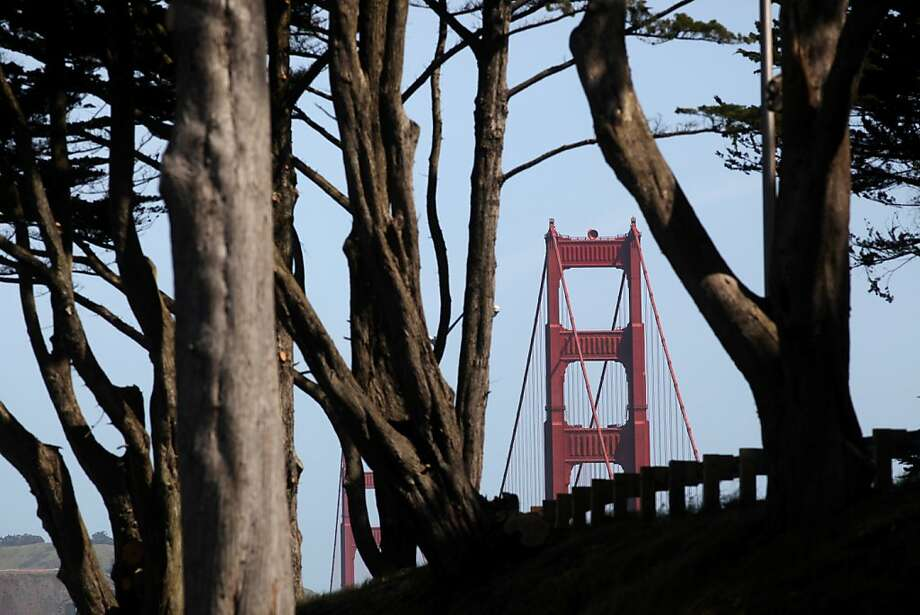 The south tower of the Golden Gate Bridge rises through a grove of trees on the Presidio on May 1, 2012 in San Francisco, Calif. Photo: Mike Kepka, The Chronicle