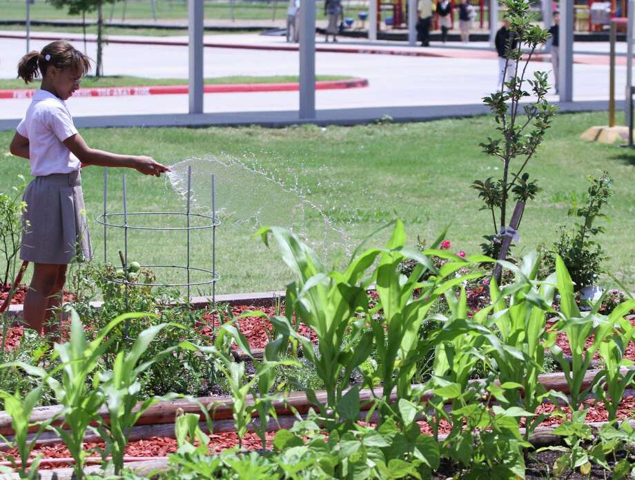 Destiny Richmond waters the Leiah's Garden at E. A. Jones Elementary School. Mrs. Khan 5th grade class grew vegetables in the garden and then made a pizza with the vegetables that were planted in the garden.