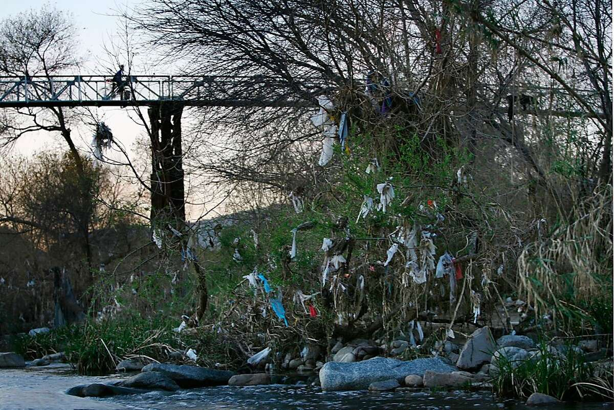 In this file photo, thousands of one-use plastic bags are left hanging on trees year-round in the Los Angeles River channel, after being washed by rains from streets and storm drains in Los Angeles. California stores dole out an estimated 19 billion lightweight plastic bags each year and most of them end up in landfills or storm drains which lead to estuaries and the ocean where they are often eaten by, or entangle, birds and wildlife with fatal results.
