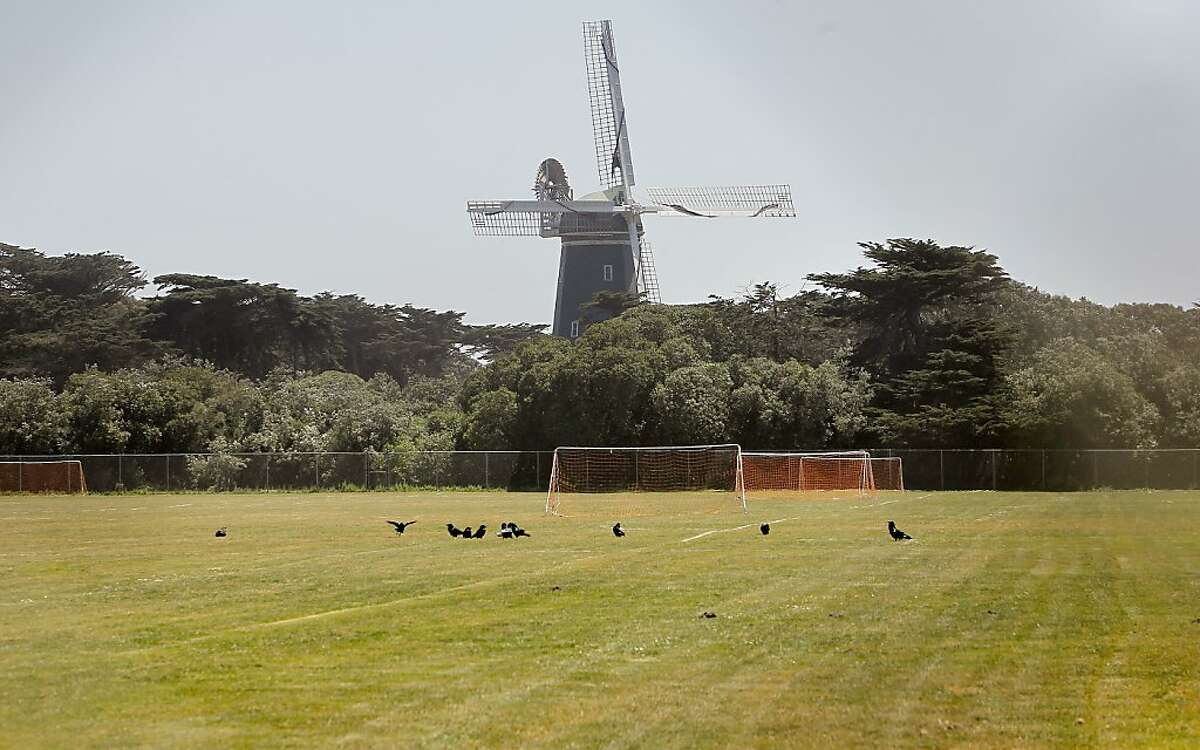 The Beach Chalet Soccer Fields, under the shadow of the Murphy Windmill, at the Western end of Golden Gate Park, on Wednesday May 23, 2012, in San Francisco,Ca. The City of San Francisco has plans to redo the soccer fields with artificial turf and install lights to allow the fields to be used by more teams. Neighbors and environmentalists are opposed to the idea.