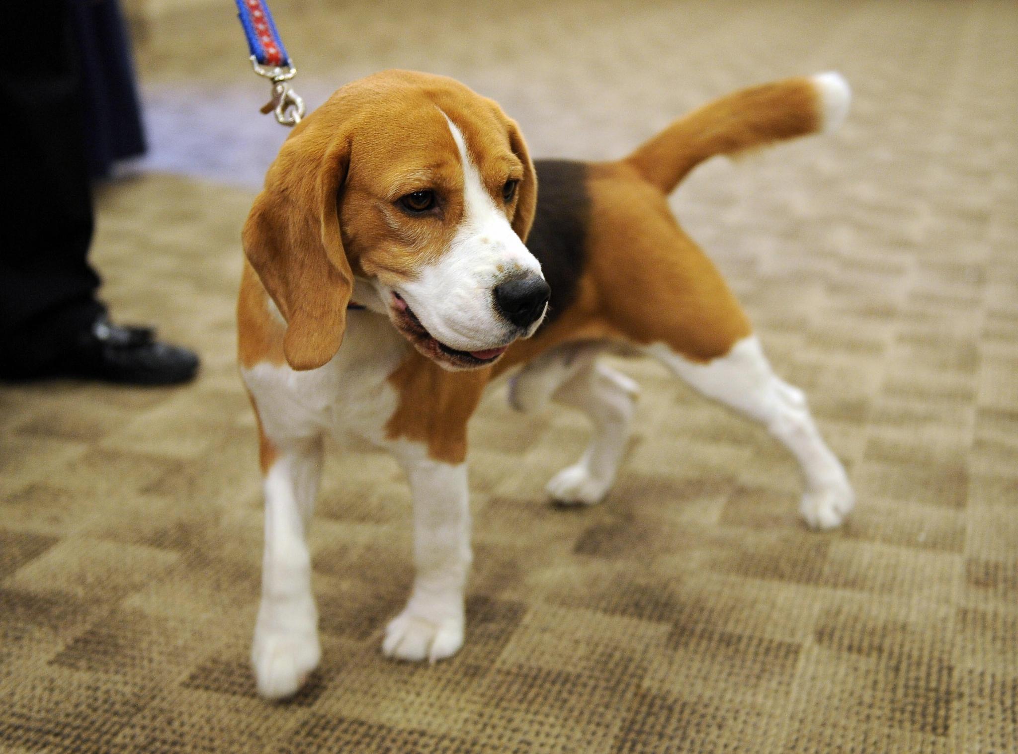 Westminster Dog Show  Dates