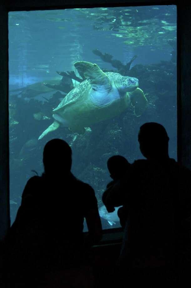 The Best Aquariums In North America San Antonio Express News