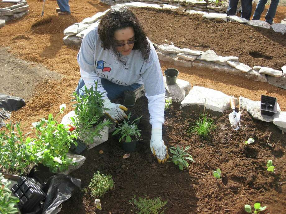 Zachry Garden, Veronica Aguirre, AP Specialist.Courtesy photo/Angie Saenz Photo: Angie Saenz/courtesy Photo