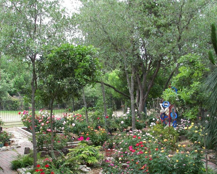 Roses in Ed Bradley's landscape needed extra TLC after weathering the brutal summer of 2011. Bradley will be among the speakers at the 15th annual Festival of Flowers. Photo: Ed Bradley