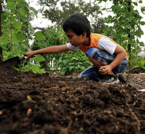 Adrian Olazaba spreads compost in the Children's Garden at the San Antonio Botanical Gardens Saturday morning. The compost is part of the San Antonio organic waste program. Photo: Robin Jerstad, FOR THE EXPRESS-NEWS / SAN ANTONIO EXPRESS-NEWS