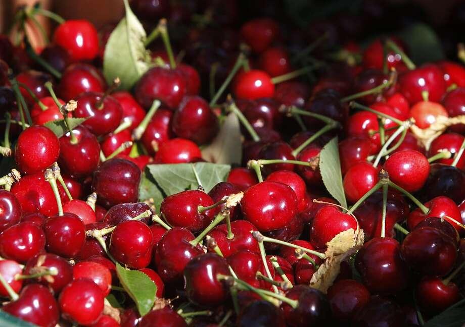 Fresh-picked cherries Photo: Paul Chinn, The Chronicle