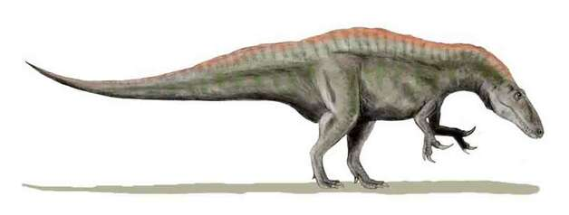 Image of a theropod called Acrocanthosaurus. A theropod is a meat-eating dinosaur that walked on two legs, had very short upper arms, and had three-toed feet. The Acrocanthosaurus was about 20 feet tall and 30 feet long, weighing from 3-5 tons. The Acrocanthosaurus walked through this area of Texas 113 million years ago. Photo: Dinosaur Valley State Park