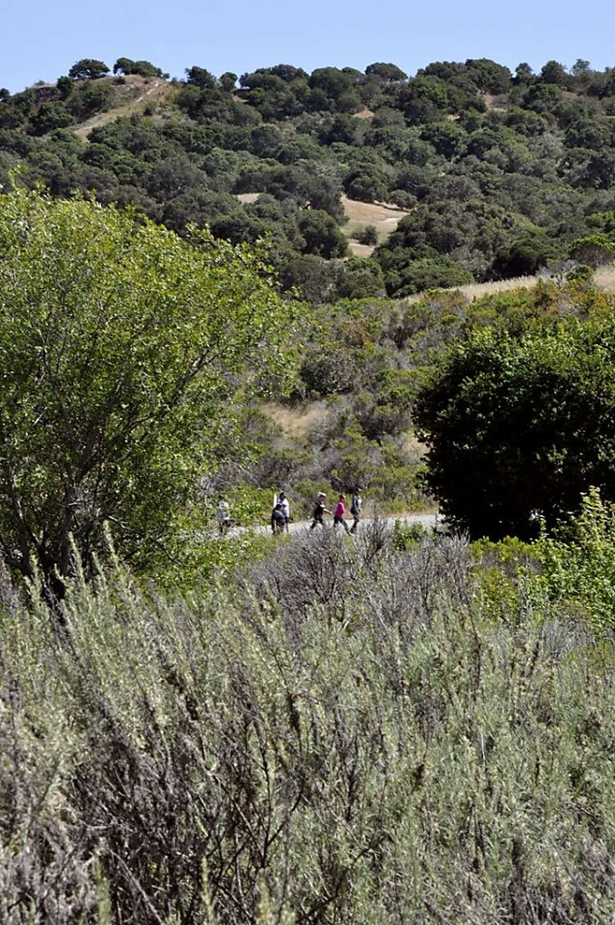 Many hikers opt for the wider, paved road to take them to other trails deeper inside Fort Ord from the Creekside Trail access.