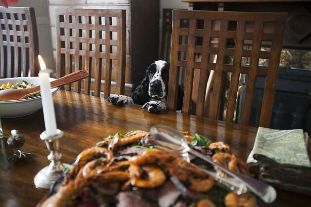 Islay, an English Cocker Spaniel, takes a peek of the food on the dining table at LivingMactavish founder Susan MacTavish Best's home in San Francisco, Calif. on Thursday, May 24, 2012. Photo: Stephen Lam, Special To The Chronicle