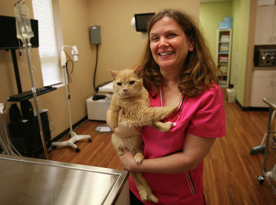 Dr. Geri Katz recently opened her cats only veterinary clinic, Aristokatz, at 636 Kings Highway east in Fairfield. Photo: Brian A. Pounds / Connecticut Post