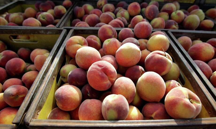 Peaches from Burg's Corner near Stonewall, TX, are fresh off the tree. Stonewall's Peach JAMboree runs June 14-16. Photo: BOB OWEN, San Antonio Express-News / © 2012 San Antonio Express-News