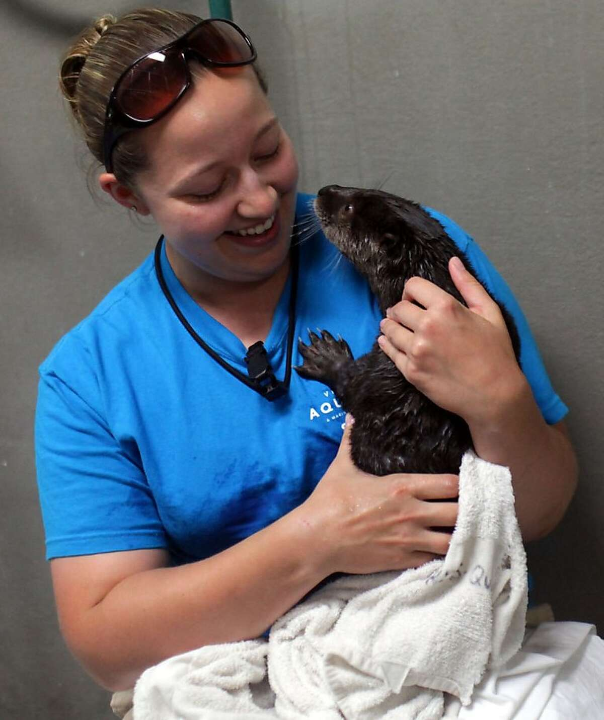 CORRECTS BYLINE TO ROSS TAYLOR INSTEAD OF SEAN PROCTOR - Virginia Aquarium animal trainer April Adams holds a baby otter in Virginia Beach, Va., on Tuesday, May 29, 2012. (AP Photo/Virginian-Pilot, Ross Taylor) MAGS OUT