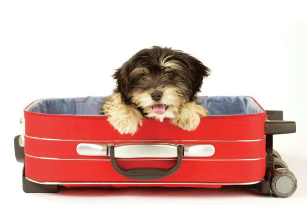 There are many options for pets when you are on vacation. Photo: © Frenc, Dreamstime.com / dreamstime.com