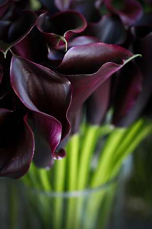 Calla Lilies are seen in Fleurt on Clement St. in San Francisco, Calif.,  on Wednesday, Dec. 7, 2011. Photo: Russell Yip, The Chronicle