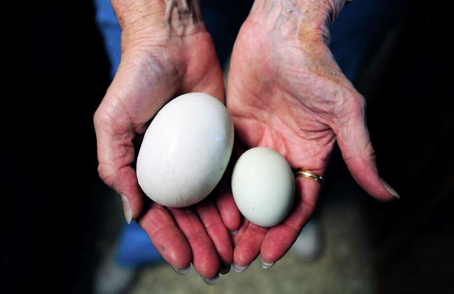 "Cookie Smith of Abilene contrasts a normal egg with the ""super egg"" one of her hens laid. Photo: Greg Kendall-Ball / The Abilene Reporter-News"