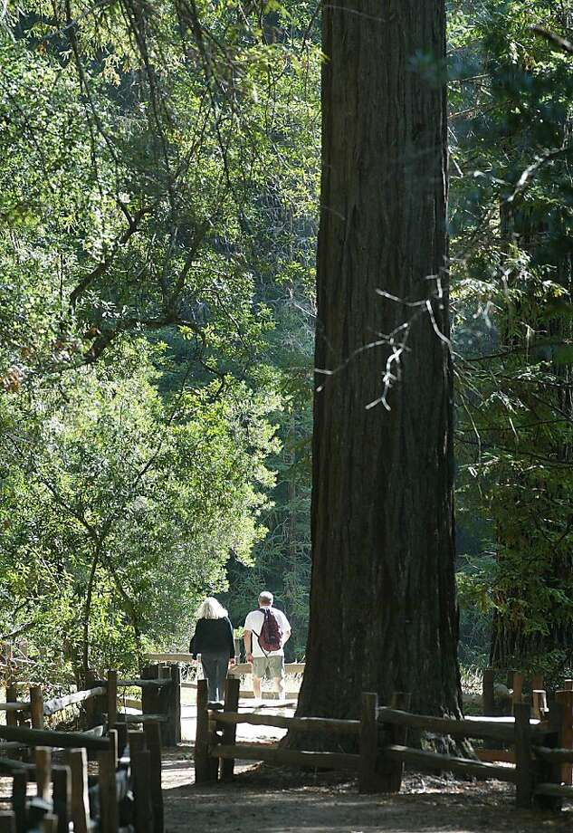 Hikers make their way down the Redwood Trail at Big Basin Redwoods State Park, which offers a variety of campgrounds. Photo: Michael Macor, The Chronicle