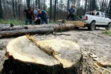 Scott Keen, third from left, shows his teammates Joe Hewtty, left, and David Keen, second from left, how to connect a third log to their homemade log pulling machine Saturday May 26, 2012 during the Lost Pines Log Pull 4x4 Off Road Burned Forest Challenge near Bastrop, Texas. The two-day event which runs through Sunday drew a hand full of participants and spectators Saturday in what event organizers called a first-of-its-kind grassroots effort to save fire-damaged trees that were killed in last year's 36,000 acre wildfire.