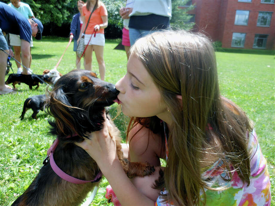 Sarah Maybruck and her dachshund Lola share a smooch Saturday at the Dachshunds Reunion in Westport. Photo: Mike Lauterborn / Westport News contributed