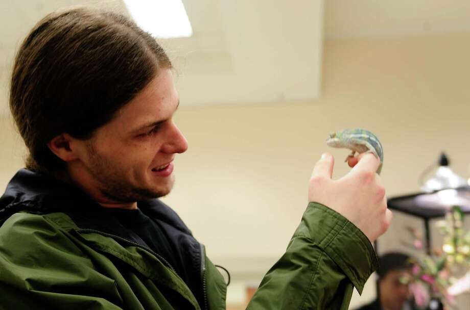 Shaun Hawk examines an Ambilobe Panther Chameleon at the Emerald City Reptile Expo 2012 at the Seattle Center Exhibition Hall on Sunday, June 3, 2012. The expo, hosted by the Northwest Herpetological Society and The Bean Farm, offered hundreds of reptiles for sale, including geckos, snakes, chameleons and lizards. Photo: LINDSEY WASSON / SEATTLEPI.COM