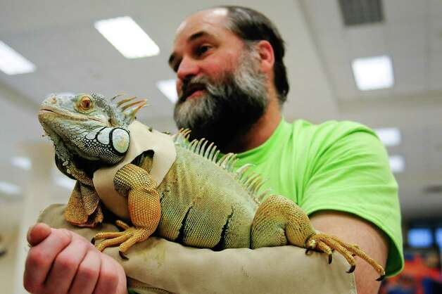 "Richard Sinnema holds ""J,"" a 6-7 pound iguana,. Photo: LINDSEY WASSON / SEATTLEPI.COM"