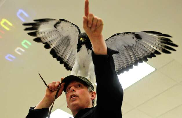 "Dave Coleburn finishes his ""Predators of the Heart"" show with Peepers, his 14-year-old Augur Buzzard, on his head. Photo: LINDSEY WASSON / SEATTLEPI.COM"