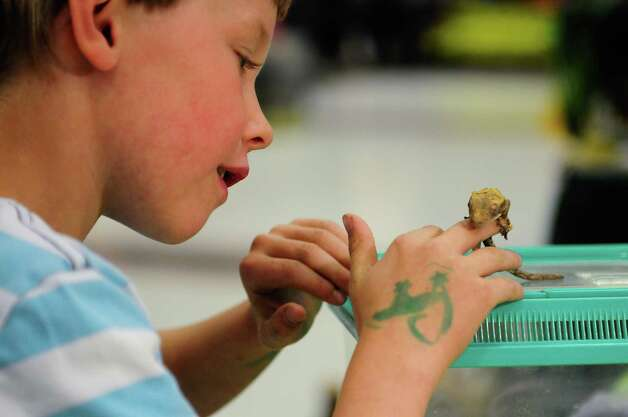 Griffin Lackey, 6, holds his new crested gecko. Photo: LINDSEY WASSON / SEATTLEPI.COM