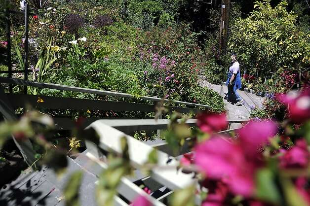"Michael Kobb of Belmont looks up at a garden at 231 Greenwich St. The Garden Conservancy, a national nonprofit group, held its annual ""open days"" event at several private gardens on Telegraph Hill Sunday June 3rd, 2012. Photo: Michael Short, Special To The Chronicle"