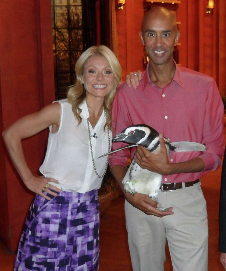 "Chuck Cureau, animal ambassador for SeaWorld/Busch Gardens, poses with Kelly Ripa and a penguin guest on an appearance on ""Live! with Kelly."" Cureau appears again on ""Live! with Kelly"" today. Photo: Courtesy Chuck Cureau"