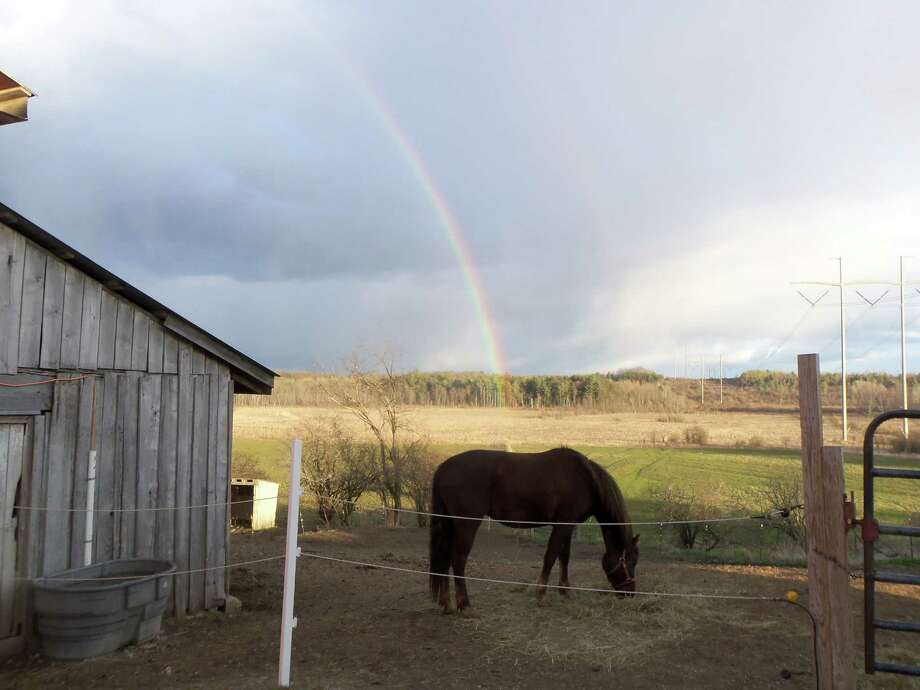 Dee Way This was taken at Renegade Farm in Princetown after a brief cloud burst.  The horses' name is Autumn.