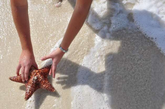 Starfish and seashells are plentiful on Aruban beaches. Photo: Melissa Ward Aguilar