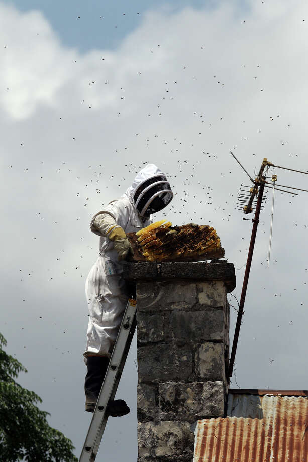 Dean Gary of Biz-ZZ-Bee Farms removes a portion of a large beehive that was in the chimney of a home in the 8000 block of Evans Road on Tuesday, June 5, 2012. Photo: John Davenport, San Antonio Express-News