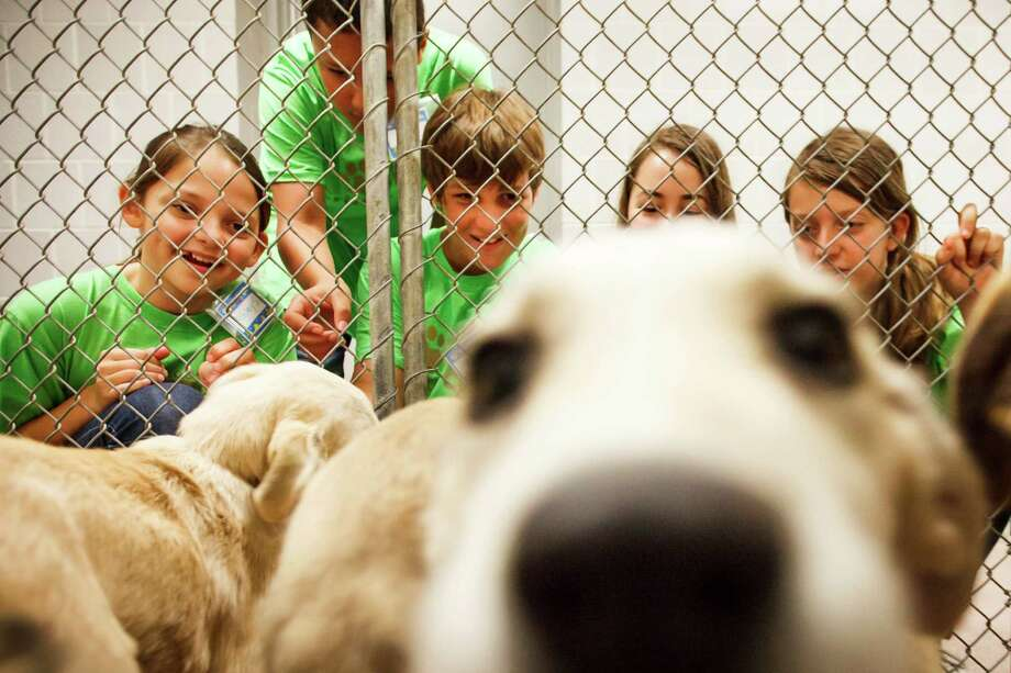 Ashley Simon, 11, left to right, Carl Wolf, 12, Adam Lennard, 12, Sophie Caldwell, 11, and Kendall Pierson, 10, play with a group of Great Pyrenees Mix puppies that are up for adoption during the Houston SPCA Critter Camp, Tuesday, June 5, 2012, in Houston. Photo: Michael Paulsen, Houston Chronicle / © 2012 Houston Chronicle