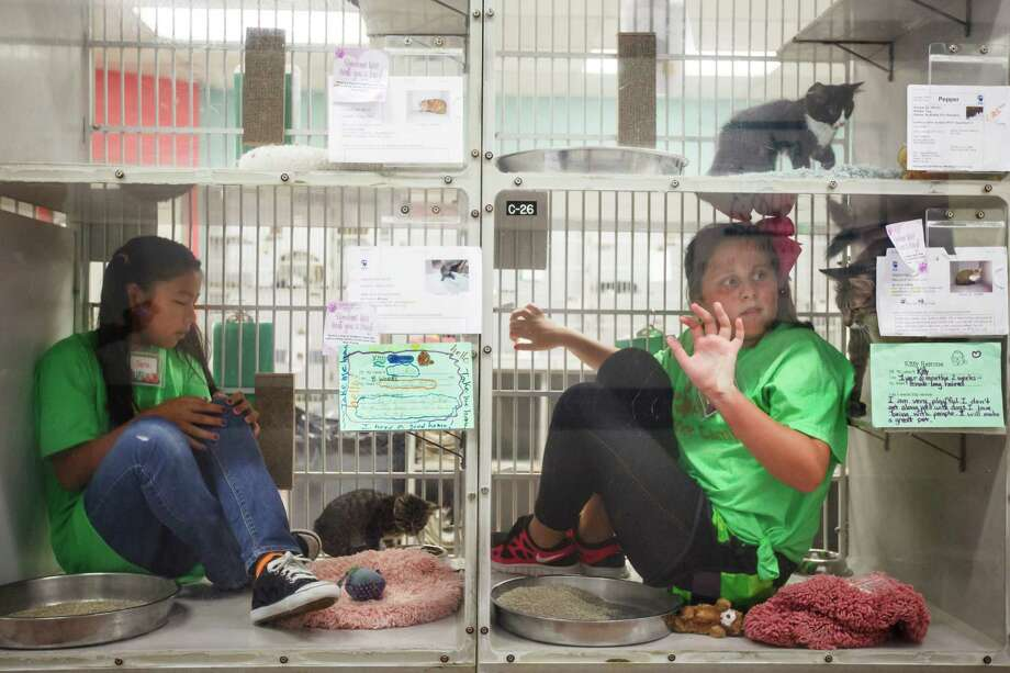 Sara Cooper, 12, and Shelby Clark, 11, right, sit inside cat cages while playing with adoptable cats during the Houston SPCA Critter Camp, Tuesday, June 5, 2012, in Houston. Photo: Michael Paulsen, Houston Chronicle / © 2012 Houston Chronicle