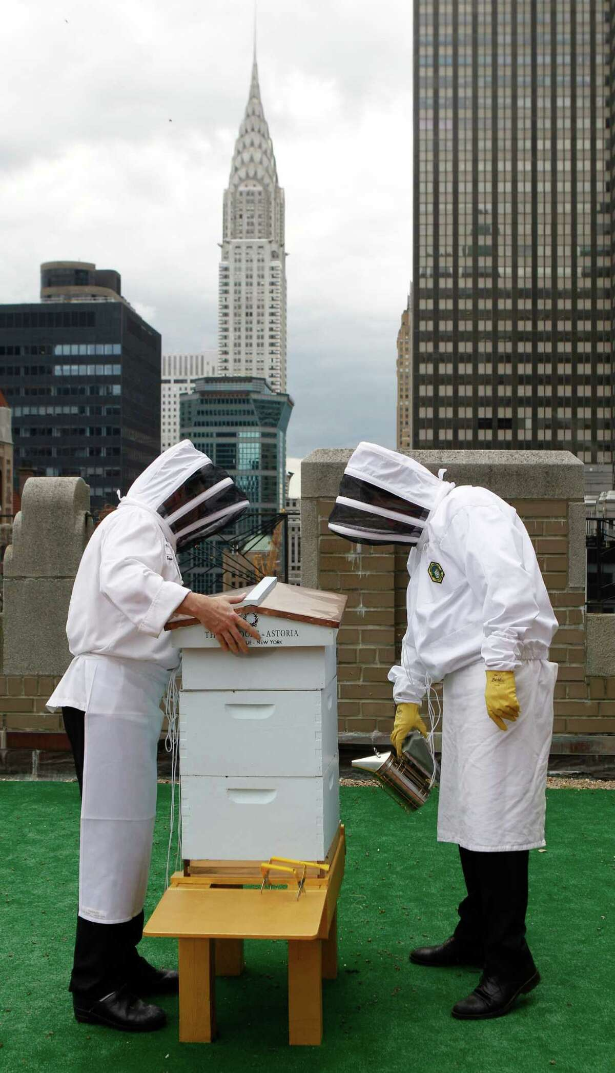 Waldorf=Astoria hotel sous chef Josh Bierman, left, and culinary director David Garcelon wear bee suits over their chef's uniforms as they inspect the hotel's bee hives on the 20th floor roof of the renowned hotel in New York, Tuesday, June 5, 2012. The hotel plans to harvest its own honey and help pollinate plants in the skyscraper-heavy heart of the city, joining a mini beekeeping boom that has taken over hotel rooftops from Paris to Times Square.