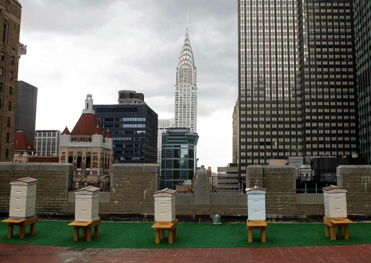 Honey bee hives sit on the 20th floor roof of the famed Waldorf Astoria hotel in New York, Tuesday, June 5, 2012. The hotel, a favorite of U.S. presidents, plans to harvest its own honey and help pollinate plants in the skyscraper-heavy heart of the city, joining a mini beekeeping boom that has taken over hotel rooftops from Paris to Times Square.