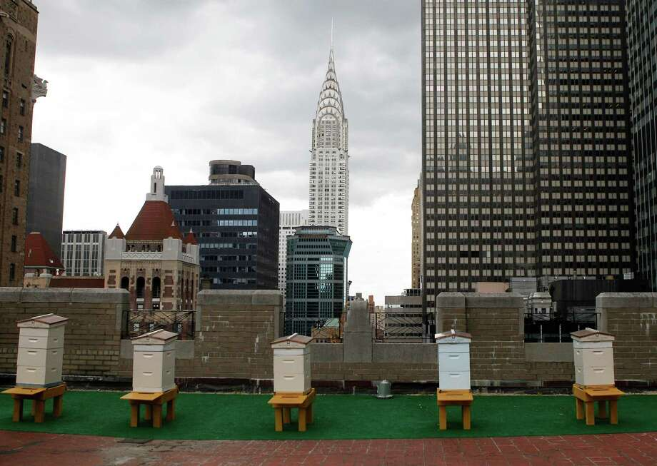 Honey bee hives sit on the 20th floor roof of the famed Waldorf Astoria hotel in New York, Tuesday, June 5, 2012.  The hotel, a favorite of U.S. presidents, plans to harvest its own honey and help pollinate plants in the skyscraper-heavy heart of the city, joining a mini beekeeping boom that has taken over hotel rooftops from Paris to Times Square. Photo: Kathy Willens, AP / AP