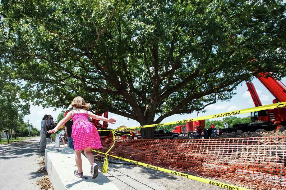 Dora Ghirardi, 7, plays around before the attempted moving of the immense 100-year-old Ghirardi Oak out the ground, Wednesday, June 6, 2012, in League City.  The moving of the massive tree was delayed  so that stronger i-beam supports could be installed under the tree. The oak was scheduled to be cut down to make way for widening Louisiana Street, but public outcry forced the City Council to reconsider. Photo: Michael Paulsen, Houston Chronicle / © 2012 Houston Chronicle