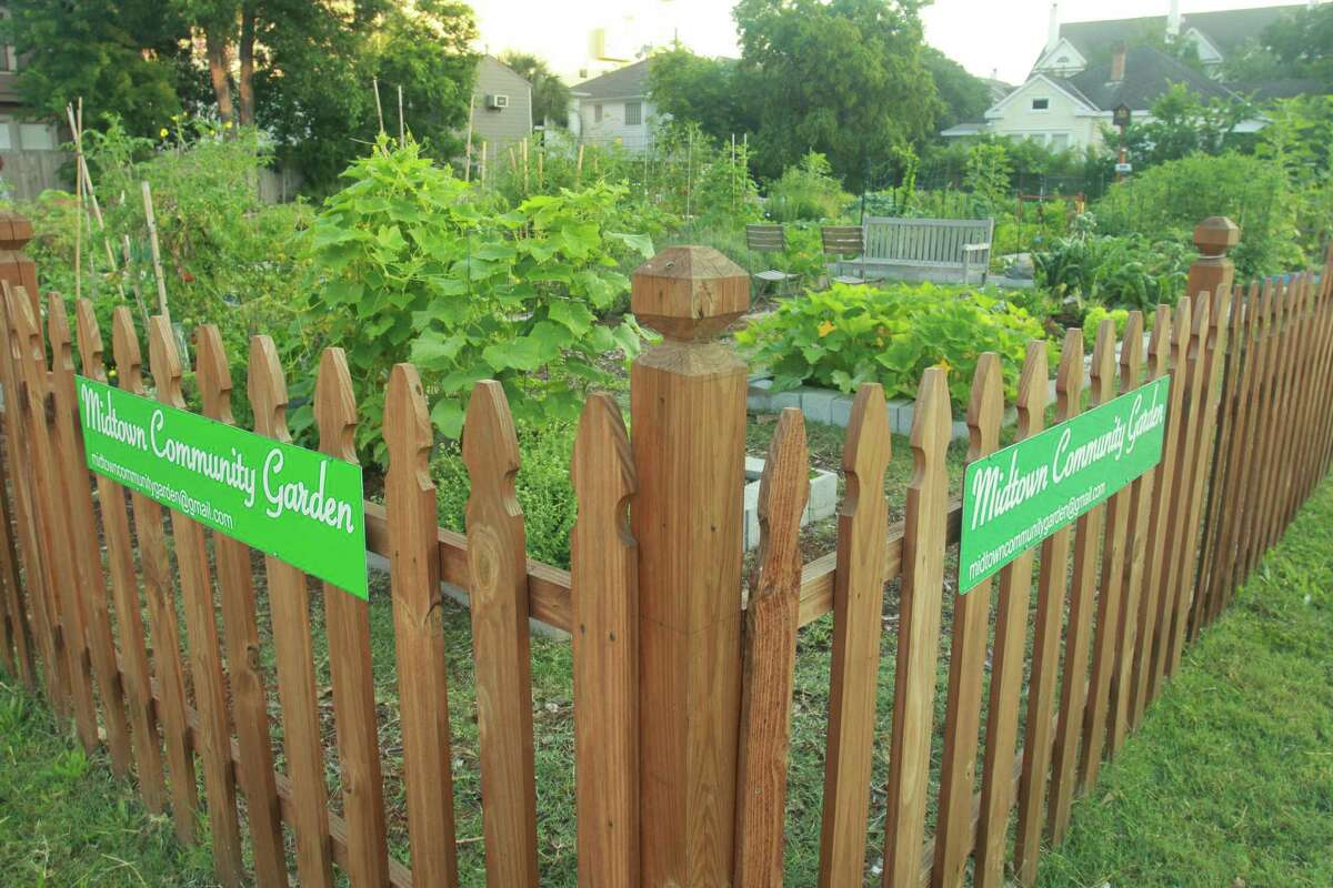 (For the Chronicle/Gary Fountain, May 17, 2012) The Midtown Community Garden at the corner of Drew and Baldwin.