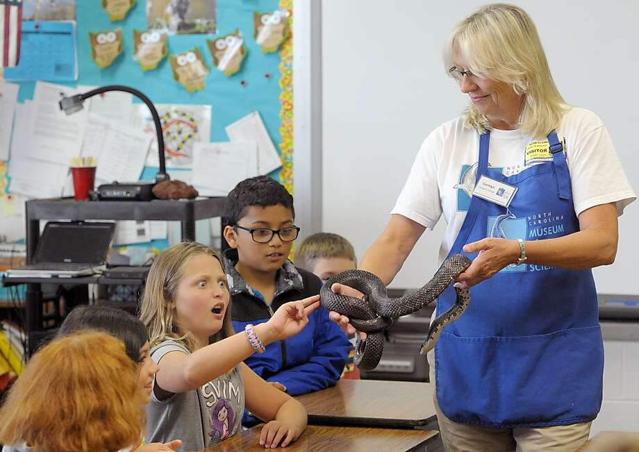 Snake eyes:Fourth-grader Emma Cox touches a black rat snake at  the North Carolina Museum of Natural Sciences in Elon and is changed  forever. Photo: Scott Muthersbaugh, Associated Press