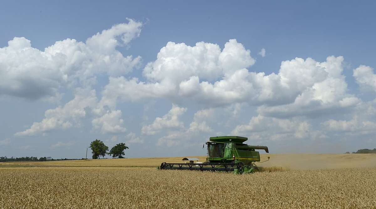 Brent Shaw wades his combine through the amber waves of grain on his land on Airport Rd. in Decatur, Ala., Tuesday, May 29, 2012. Shaw said he is harvesting between 70 and 75 bushels of the soft, red winter wheat per acre this season. (AP Photo/The Decatur Daily, Gary Cosby Jr.)