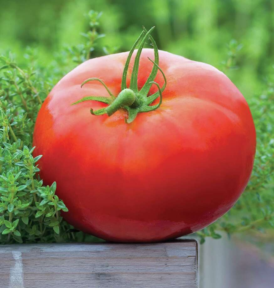 It's tomato-eating season. Show off your homegrown fruit in a local contest Saturday. See the Garden Calendar on page E5 for garden centers sponsoring tomato events. Photo: Burpee / © Rob Cardillo
