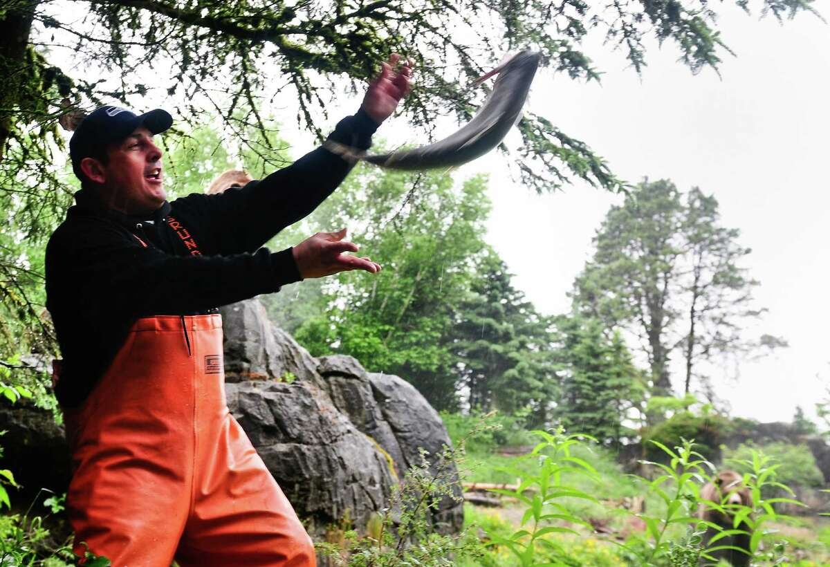 Pike Place Market fishmonger Chris Bell tosses a salmon around with his coworkers during a salmon toss event to feed the Woodland Park Zoo's 800-lb grizzly bear brothers, Keema and Denali.