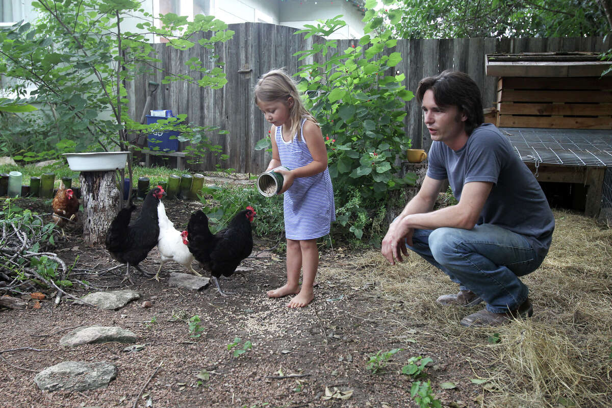 Joshua Alder (right) spends time in his backyard near Hildebrand and Interstate ten with his daughter Storey,4. Alder and his wife Emily are raising four chickens that yield about a dozen eggs a week.