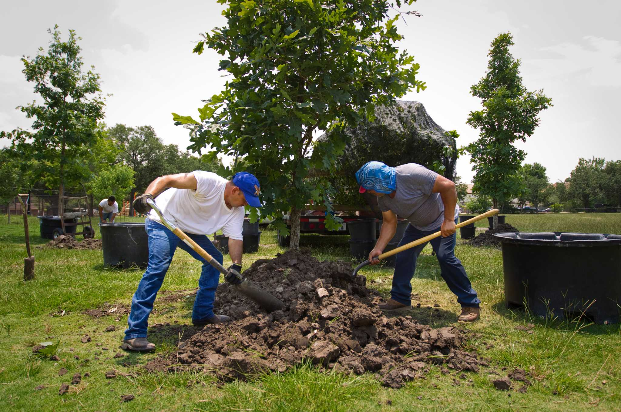 Replant Trees  Letters