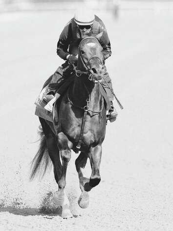 ELMONT, NY - JUNE 08: Paynter trains on the track in preparation for the 144th Belmont Stakes at Belmont Park on June 8, 2012 in Elmont, New York.  (Photo by Rob Carr/Getty Images) Photo: Rob Carr / 2012 Getty Images