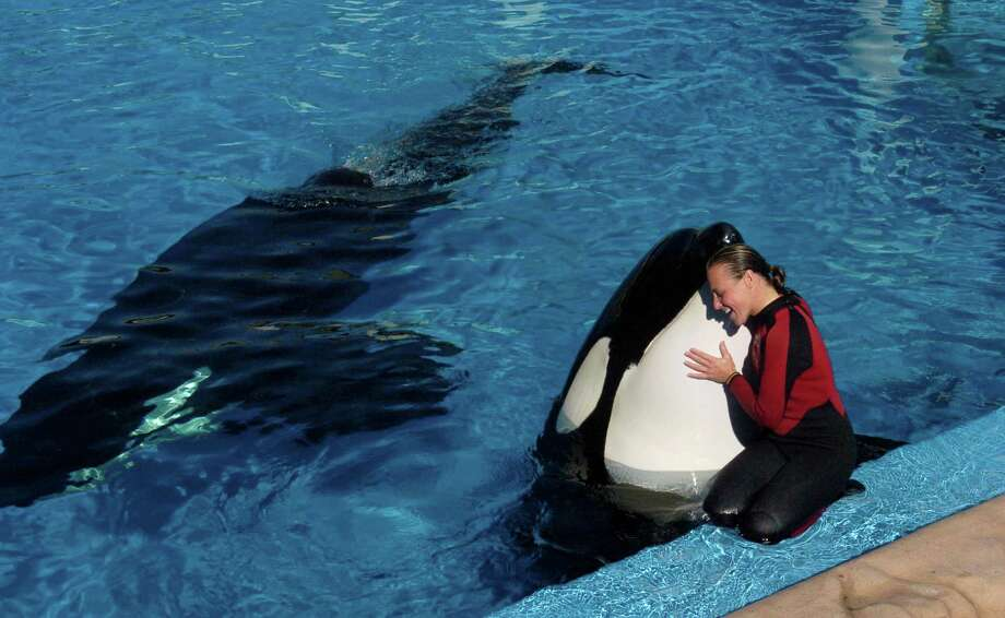 Dawn Brancheau, a whale trainer at SeaWorld Adventure Park, was killed during an accident with a killer whale in 2005 at the SeaWorld Shamu Stadium in Orlando, Fla. Photo: Julie Fletcher / Orlando Sentinel